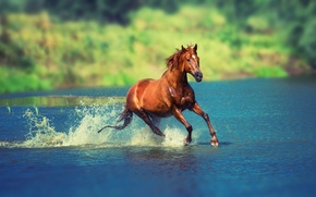 Picture summer, water, the sun, squirt, nature, river, horse, horse, running, bokeh