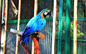 Picture color, Parrot, beautiful