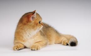 Picture cat, photo, neko, ears
