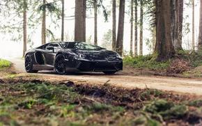 Picture Lamborghini, Black, Aventador, Forest, Woods