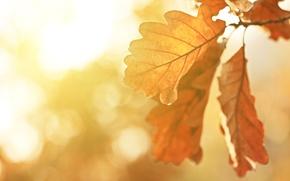 Picture macro, landscape, nature, India, beautiful, landscape, nature, beautiful, the sun's rays, macro, Autumn trees, India, …
