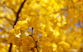 Picture autumn, leaves, tree, branch, yellow