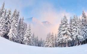 Picture winter, forest, snow, mountains, nature, fog, landscapes, ate, beautiful, tree, blue sky, fabulously, Wallpaper from …