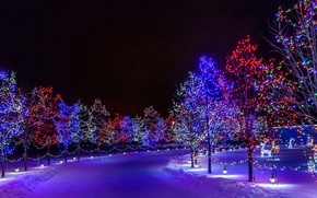 Picture New Year, Park, illumination, snow, holiday, winter, road, trees, the city, night