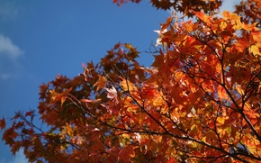 Picture autumn, the sky, leaves, branches