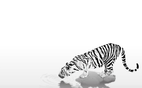 Picture animals, easy, strips, tiger, black & white, black and white, caution, thirst