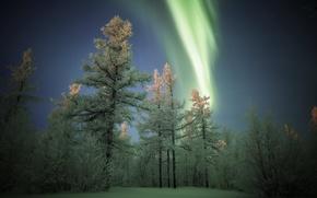 Wallpaper winter, night, lights