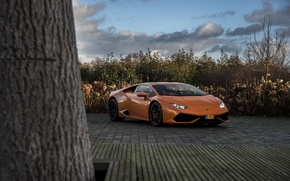 Picture Lamborghini, Tree, Huracan, LP610-4