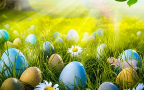 Picture grass, rays, light, flowers, nature, eggs, spring, Easter