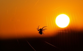Picture light, web, spider