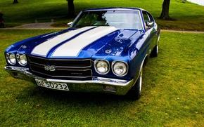 Picture grass, strip, lawn, Chevrolet Chevelle SS, Chevrolet, Camaro