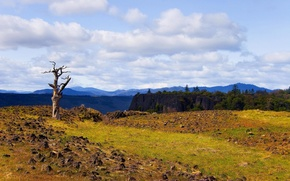 Picture forest, summer, the sky, clouds, landscape, mountains, nature, tree, rocks, dry