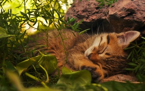 Picture cat, grass, cat, leaves, stones, kitty, red, green, sleeping, lies