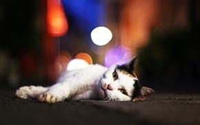 Wallpaper cat, glare, looks, Tomcat, Kote