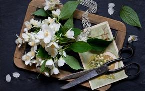Picture style, Board, still life, flowers, a bunch, scissors, postcard, Jasmine