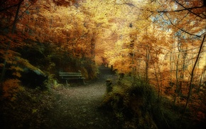 Picture leaves, trees, nature, photo, forest, autumn Park