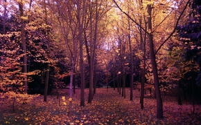Picture Autumn, Trees, Forest, Park, Fall, Park, Autumn, Forest, Trees, Falling leaves, Leaves