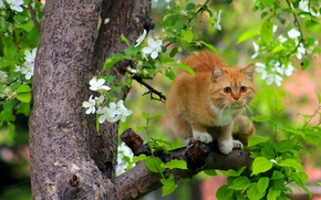 Picture cat, red, tree, flowering, cats flew, on the tree, spring, cat