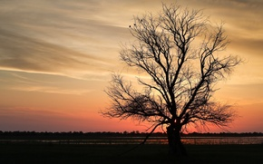 Picture sunset, branches, tree