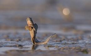 Picture splash, water, tail, fish