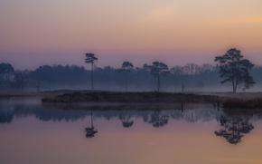 Picture fog, dawn, morning, fens