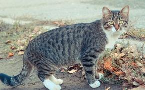 Picture autumn, cat, eyes, cat, cat, Kota