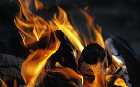 Picture macro, background, fire, Wallpaper, the fire, wood, coal, flame, flames