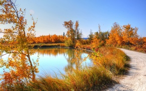 Picture road, autumn, the sky, grass, leaves, trees, nature, pond, birch