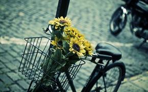 Picture leaves, flowers, blue, yellow, bike, background, widescreen, Wallpaper, basket, mood, sunflower, blur, contrast, wallpaper, flowers, …