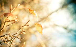 Picture leaves, macro, trees, yellow, background, tree, widescreen, Wallpaper, blur, branch, wallpaper, leaves, yellow, widescreen, background, …