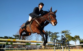 Picture competition, horse, rider, rider, wallpaper., horse, overcoming, obstacles, competition, horse riding, show jumping