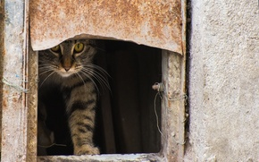 Picture cat, cat, street, Kote, Peeps, opening