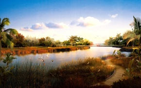 Wallpaper birds, river, trail, 153