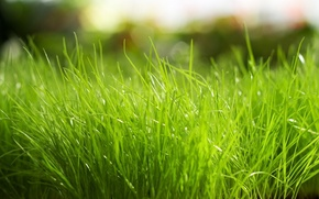 Picture grass, macro, bright, green