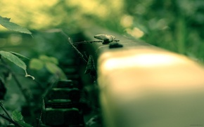Wallpaper the way, macro, rails