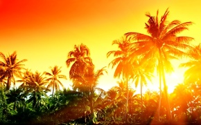 Picture landscape, palm trees, Rays of the sun