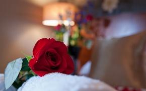 Picture macro, room, rose