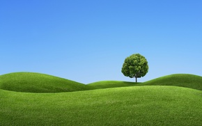 Picture the sky, tree, hills, landscape