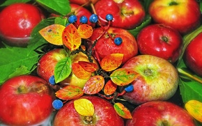 Picture water, berries, branch, fruit, Apples
