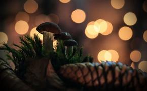 Picture nature, background, mushrooms