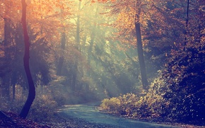 Picture morning, fog, road, trees, autumn, forest
