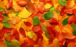 Picture leaves, nature, photos with nature, macro autumn