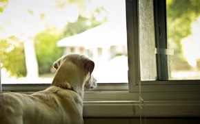 Picture house, dog, window