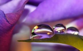 Wallpaper flower, drops, nature, reflection