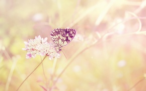 Picture field, flower, summer, the sun, light, butterfly, plant, color, insect