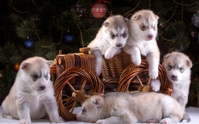 Picture wagon, five, New year, tree, husky, puppies