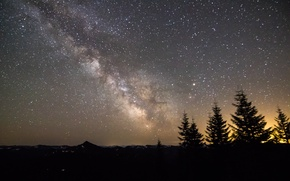 Picture stars, trees, the milky way