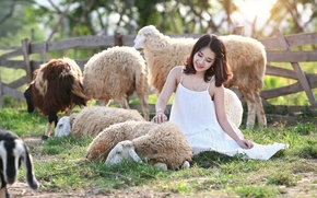 Wallpaper sheep, girl, nature