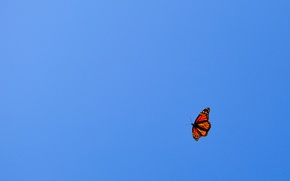 Picture the sky, flight, blue, orange, minimalism, Butterfly
