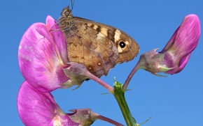 Picture flower, butterfly, plant, wings, petals, insect